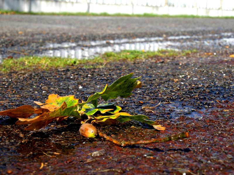 LSNED_Automne2